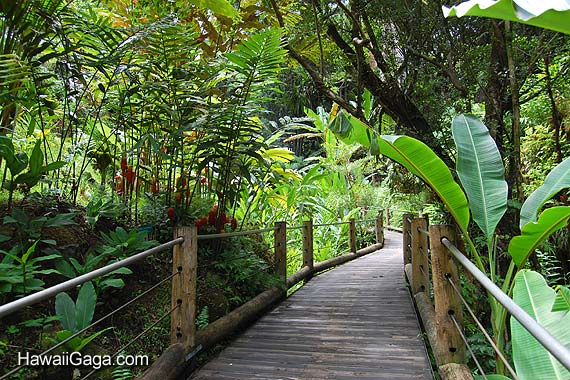 Hawaiian Tropical Botanical Garden
