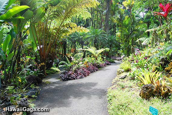 Hawaiian Tropical Botanical Garden Hawaiian Tropical Botanical Garden ...