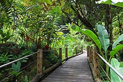 Hawaiian Tropical Botanical Garden thumbnail