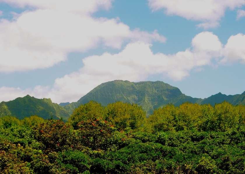 Aloha Loft
