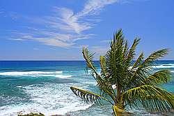 Kuhio Shores 418