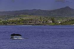 Whalers Cove 1 Bedroom Ocean View