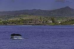 Whalers Cove 2 Bedroom Ocean View